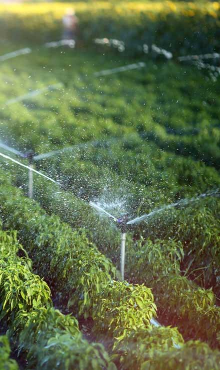 Ubiquitous Landscape Solutions Irrigation System Repair