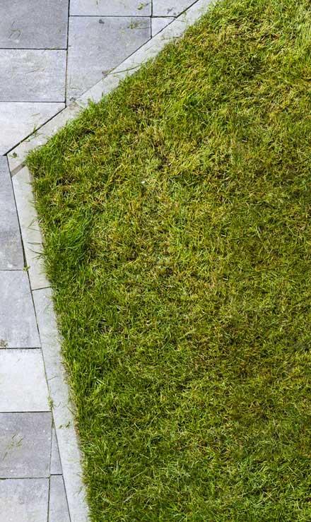 Ubiquitous Landscape Solutions Lawn Dethatching