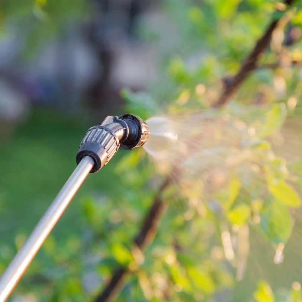 Lawn Pest Control Service