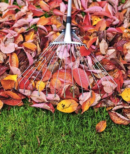 Ubiquitous Landscape Solutions Fall Clean Up