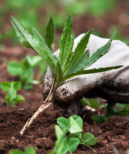 Ubiquitous Landscape Solutions Weed Control services